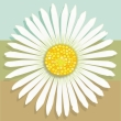 White daisy on tri-color (blue, green, brown) square.