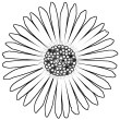 Drawing in black ink of an open daisy flower facing the viewer. The daisy is the symbol of the Philosophy of Happiness book and website.
